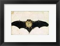Framed Bat, 1522