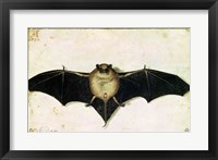 Framed Bat, 1522