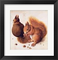 Framed Squirrels, 1512