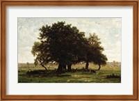 Framed Holm Oaks, Apremont