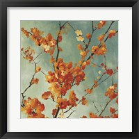 Framed Orange Blossoms I