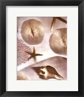 Nautical Illuminations No.1 Framed Print