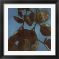 Framed Eucalyptus I