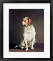 Framed Portrait of a King Charles Spaniel