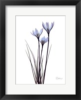 Framed Blue Floral X-ray White Rain Lily
