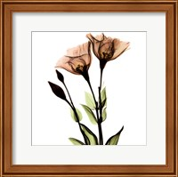Framed Crystal Flowers X-Ray, Gentian