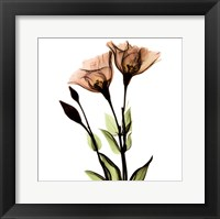 Crystal Flowers X-Ray, Gentian Framed Print