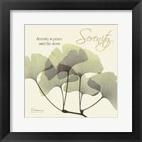 Framed Serenity Gingko