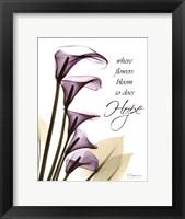 Framed Blackberry Calla Lilies, Hope