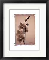 Framed Polaroid Orchid