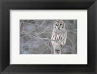 Framed Owl In The Woods