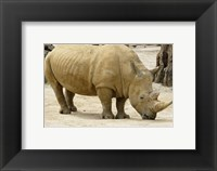 Framed African Rhinoceros