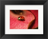 Framed Ladybug On Leaves