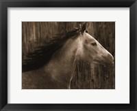 Framed Buckskin