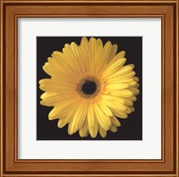 Framed Gerbera Daisy Yellow