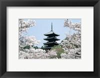 Framed Cherry Blossoms Ninna-Ji Temple Grounds Kyoto Japan