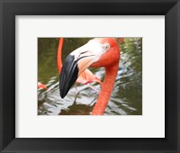 Framed Florida Flamingo