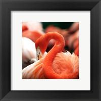 Framed Flamingo National Zoo