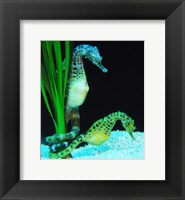 Framed Hippocampus