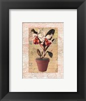 Framed Potted Cattleya
