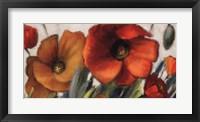 Poppy Splendor II Framed Print