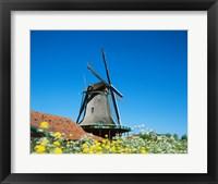 Framed Windmill, Zaanse Schans, Netherlands In Flowers