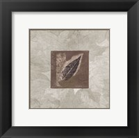 Framed Elm Leaf