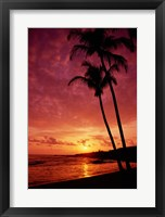 Framed Silhouette of palm trees at sunset, Kauai, Hawaii, USA
