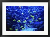 Framed Maui Ocean Center Maui Hawaii USA