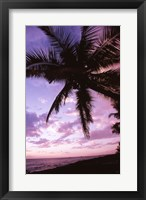 Framed Kauai Hawaii USA Palm Tree