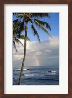Framed Kauai Hawaii - Palm Tree
