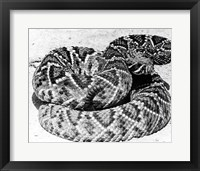 Framed Close-up of a Western Diamondback Rattlesnake (Crotalus atrox)