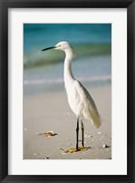 Framed Snowy Egret