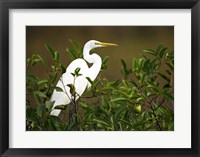 Framed Close-up of a Great Egret Perching on a Branch