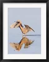 Framed Reflection of Reddish Egret in Water
