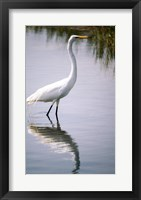 Framed Egret In River