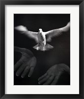Framed Close-up of a person releasing a White Dove