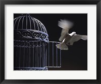 Framed White Dove escaping from a birdcage