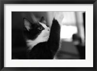 Framed Reach