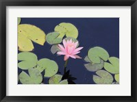Framed Lotus Eaters I