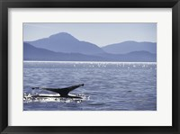 Framed Humpback Whale in Alaska, USA