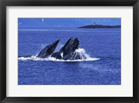Framed Humpback Whales in Alaska, USA