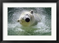 Framed Polar Bear - swimming