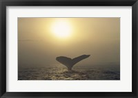 Framed Humpback Whale Tail at Sunset