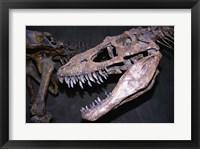 Framed Albertosaurus, Royal Tyrrell Museum, Drumheller, Alberta, Canada
