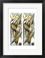Framed 2up French Tulip II
