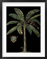 Framed Palm & Crest on Black II