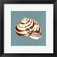 Framed Shell on Aqua I