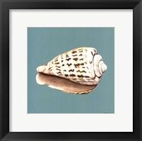 Framed Shell on Aqua II