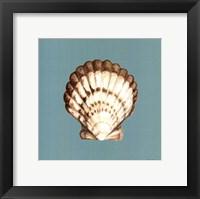 Shell on Aqua III Framed Print